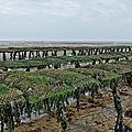 Normandie - asnelles - parcs à huitres