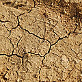 Sécheresse dans les blés en france - 25 % de perte par rapport à 2019 - drought in wheat in france - 25% loss