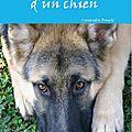 Livre : l'été d'un chien