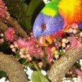 Australie Faune Flore Paysages - janvier 2005 (12)