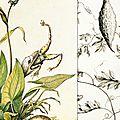#135 puc-puggy, le chasseur de fleurs
