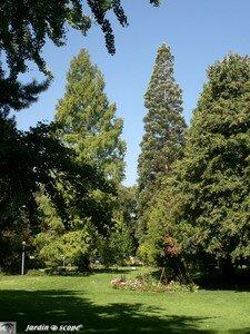6908_Sequoia_Colmar