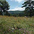 Carte postale # 14 retour par la montagne...