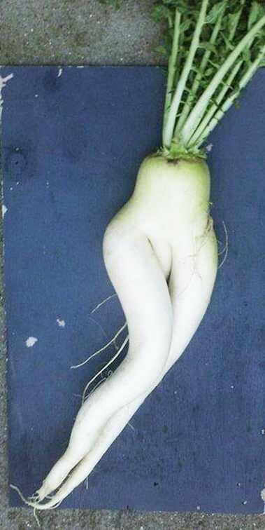 20-fruits-et-legumes-exceptionnels-qui-prennent-forme-humaine-ou-animale-20