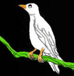 oiseau_debout_copie