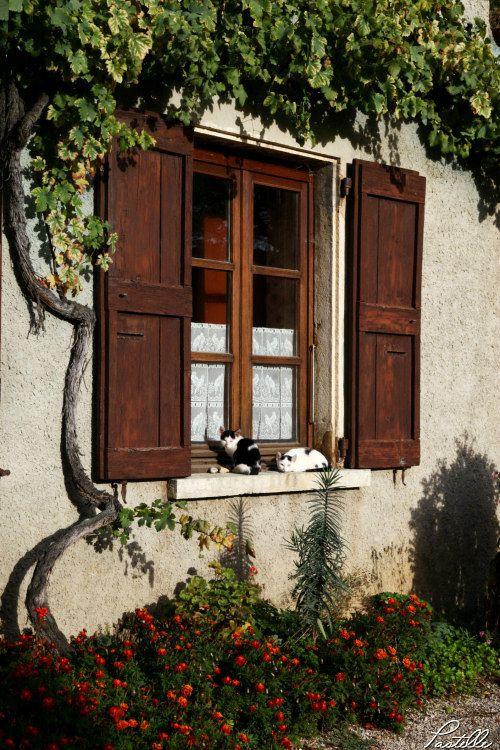 Fenetre chats Perouges_12 13 10_0116
