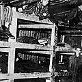 1945 - la très organisée résistance du camp de buchenwald