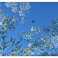 13-06-11, Un jardin sous le ciel (b)