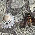 Enorme papillon de nuit