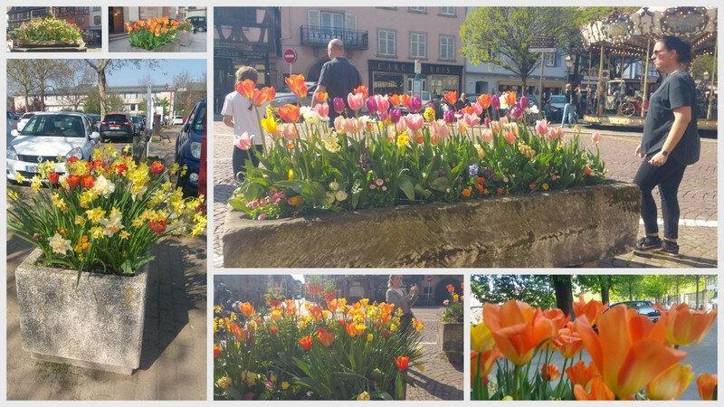 fleurs obernai