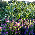 Windows-Live-Writer/Jardin_10232/DSCN0746_thumb