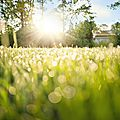 Méditation pour un matin d'été