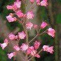photos de belles pantes et fleurs 009