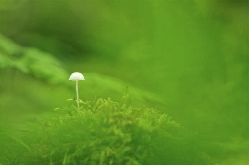 champignon sur mousse