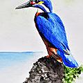 Oiseau sur rocher