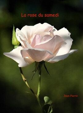 Rose blog
