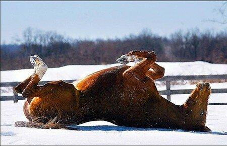 cheval5uq