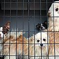 Une trentaine de chiens souffrant de malnutrition saisis chez un particulier