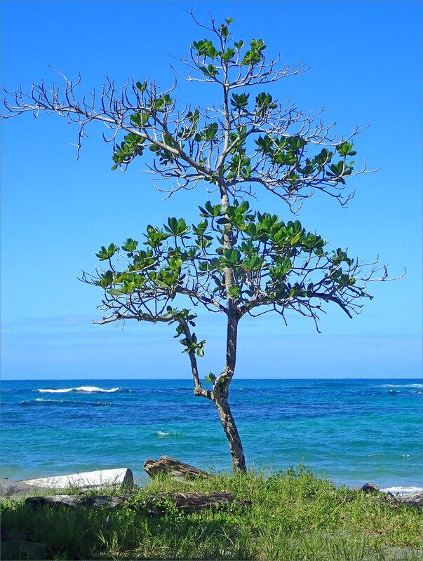 J8 CR Manzanillo tough 121218 ym 56 mer arbre