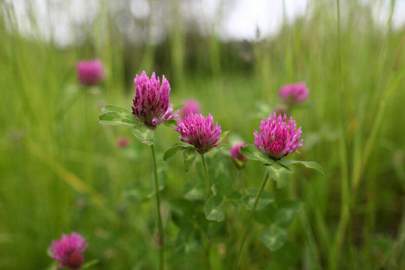 fleurs-des-pres