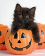 chat-noir-halloween