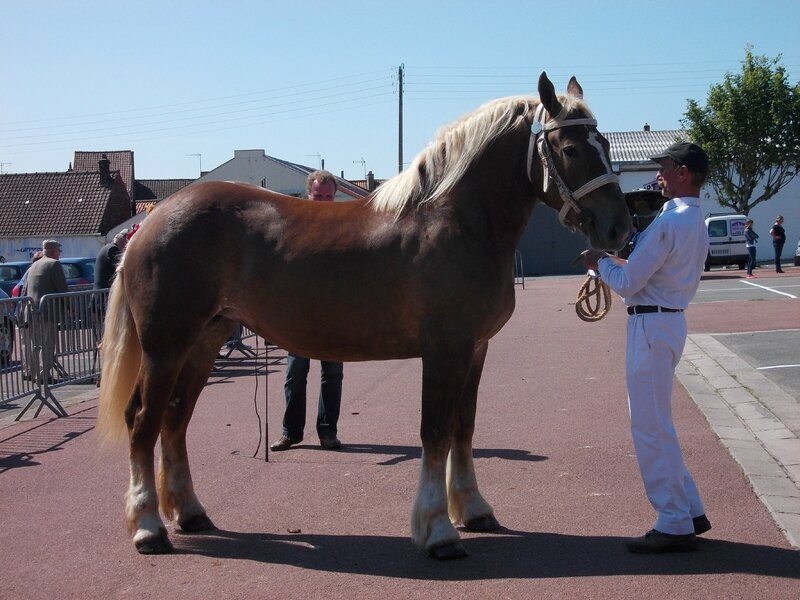 Cheyenne de Colincthun - 1ere 3 ans - Local de Marquise - 16 Juin 2015 - Photo Babeth