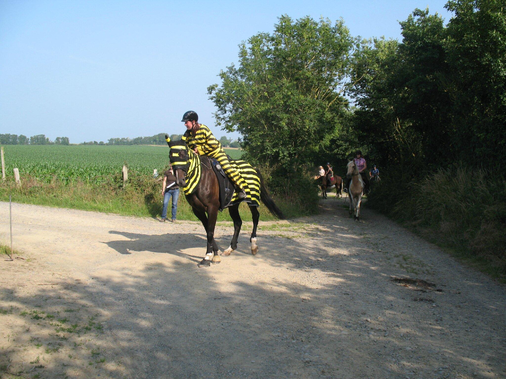 jeu du fer à cheval (3)