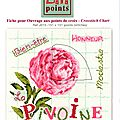 sal lili point pivoine étape 1 (1)