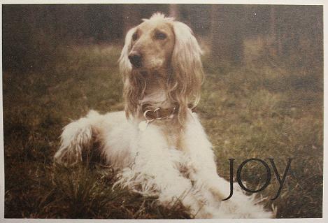 joy_002