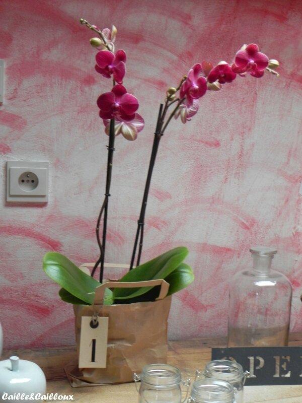 orchidée (2)_GF
