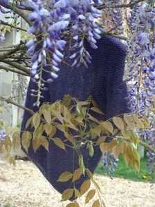 violet_trendy_01