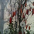 Lausanne - impressions automnales - 19.11.2011