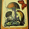 Automne - les champignons