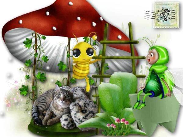 chat champignon
