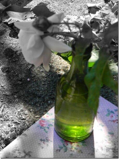 Windows-Live-Writer/jardin-charme_12604/DSCN0674_thumb