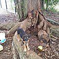 Ramsès attachée à son arbre, ses pattes ne touchaient pas terre