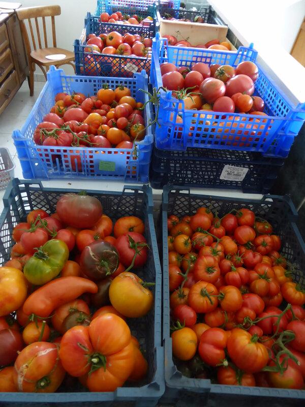 5-tomates (2)