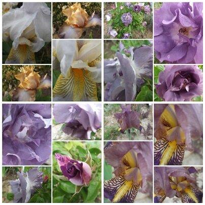 Domi & fleurs (14)