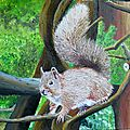 A cute squirrel,