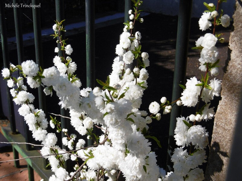1-Fleurs de Léon 220319