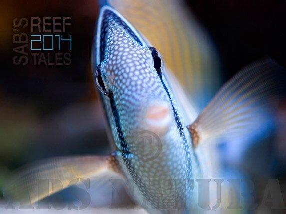 reeftales2014_demoAN1