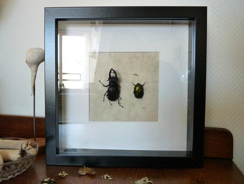 cadre insecte 01