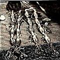 Le medium voyant ahango, se sert du fa-oracle pour ses voyances et consultations afin d'interroger le monde des invisibles.
