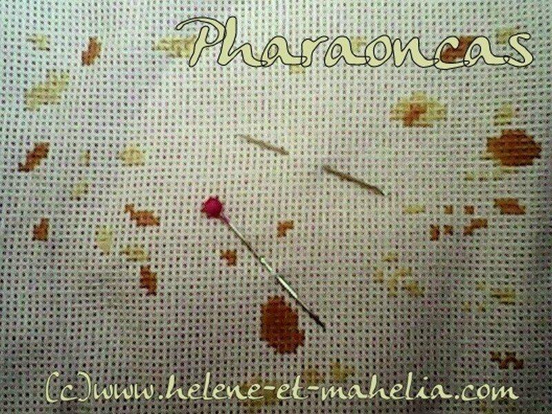 pharaoncas_salnov14_2