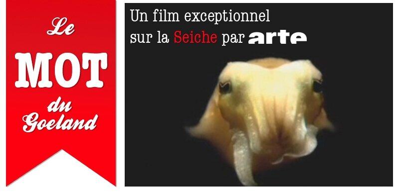 video_seiche