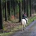 Balade à cheval dans la forêt P1080252