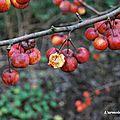 Fleur au jardin 30 01 2012 045 copie