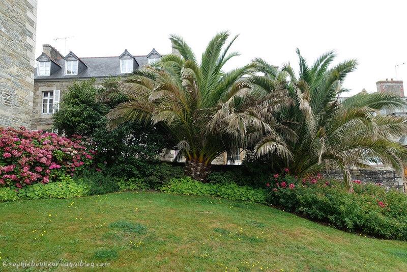 FT palmier