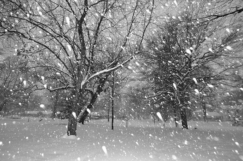 Flocons_-_tombe_la_neige_ par Serge Melki 2009