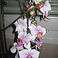 ORCHIDEE 42